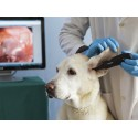 DE551 FireFly Wireless Veterinary Video Otoscope